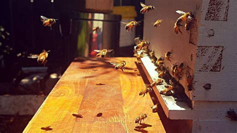 Beekeeping 101: how to setup (or adopt) your own hive